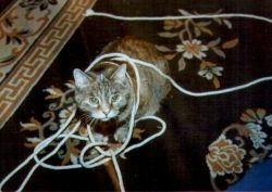 My cat Gypsy playing with string.