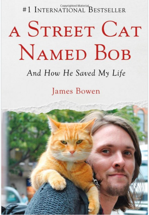 cat, street cat named Bob