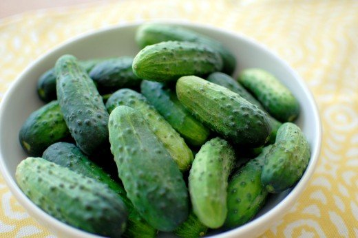 Pickling_cucumbers