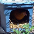 How to Make Simple Chicken Coop Nesting Boxes