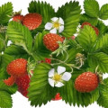 Garden Tips from The Micro Farm Project: How to Grow Strawberries