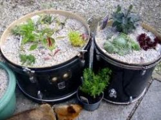 Creative plant containers