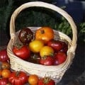How to Grow Tomatoes Anywhere, Even in the Low Desert