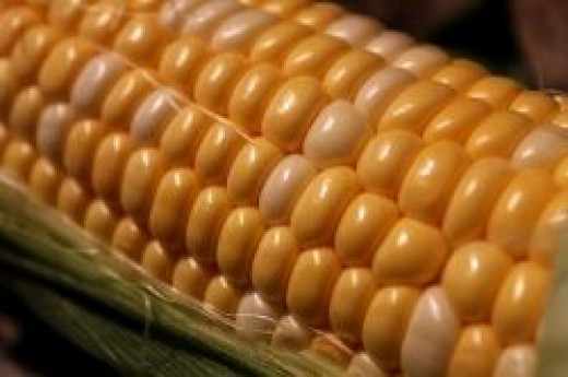 corn is high in protein