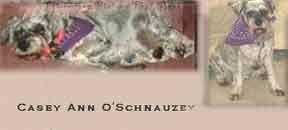 Casey Anne O'Schnauzey