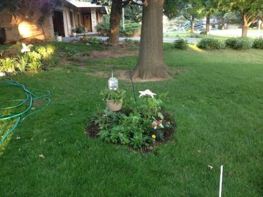 The little round garden containing a mimosa tree and various perennials.