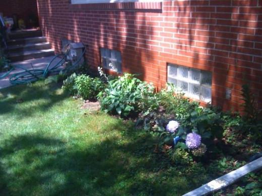 Garden under front window