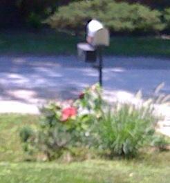 My little mailbox garden