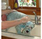 Poor Scrappy - he was always so good for his bathie!