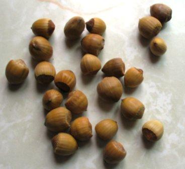 local hazelnuts