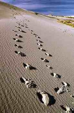 Love is God... FootPrints in The Sand