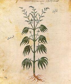 Edible Seeds - Hemp Seed