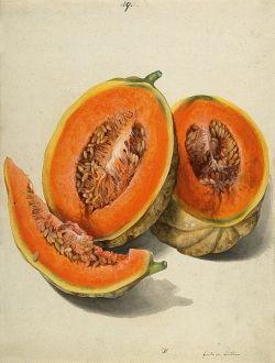 Edible Seeds - Pumpkin Seeds