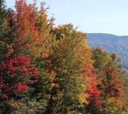 Mount Washington fall foliage
