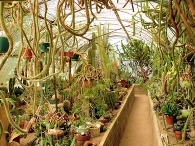 A Greenhouse Cactarium in Moorten's Botanical Garden