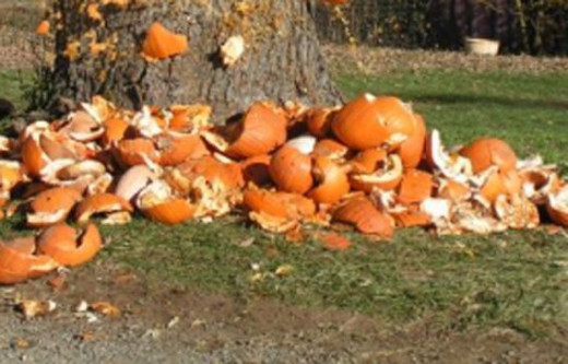 The North Carolina Zoo will hold a long-standing tradition of Halloween mischief: pumpkin-smashing.