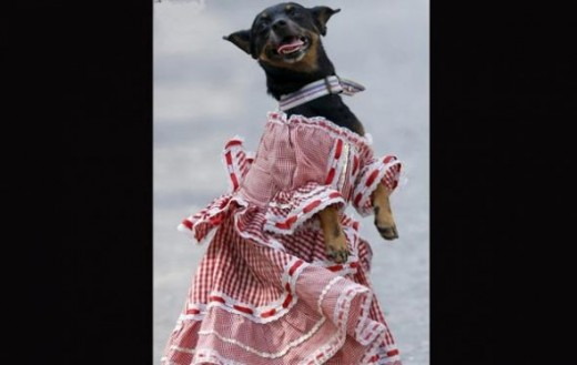 A dog dressed in traditional Cunmbia outfit participates during a parade at the Carnaval de Barranquilla in Colombia