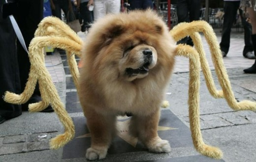 A dog dressed in a spider costume takes part in a Halloween costume parade for pets at a shopping mall in Quezon City, Metro Manila.
