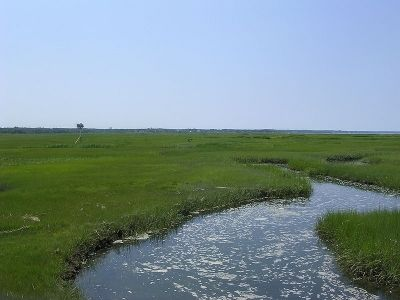 Bass Hole Marsh in Yarmouth