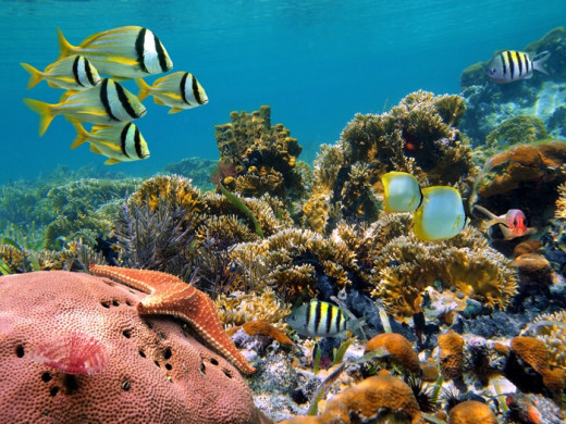 There are more than 74 low lying coral atolls, which are the part of the Outer Islands in Seychelles.