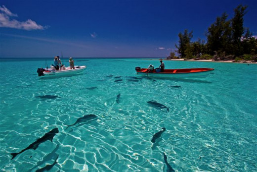 Fishing s a favorite thing to do among the locals of the island but now tourists also love to do fishing in Seychelles.