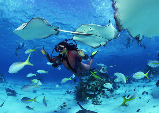 Dive and swim with mantas, octopus, turtles and various other 300 species. While diving you can enjoy the views of the beautiful coral reefs.