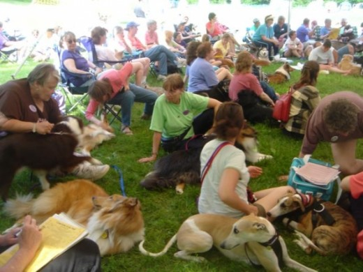 Dog lovers and dogs at dog camp