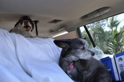 travelling with dogs