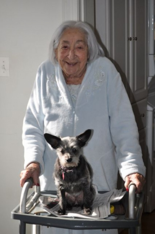 Wee Gizmo hitches a ride on Mom's 2 wheel handicap walker