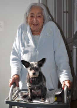 Gizmo hitches a ride with Mom on her handicapped walker