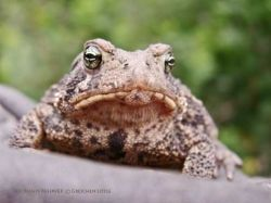 Toad Portrait   All Rights Reserved