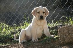 Puppy image courtesy of Clownfish on Creative Commons