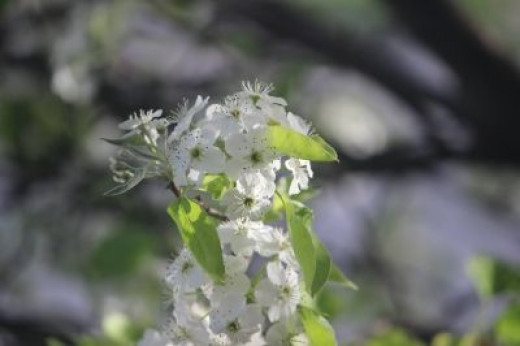 Here's a closer look at the flowers on the tree...