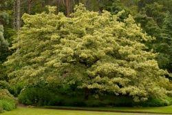 Monroe's shrubs