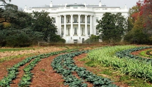 The White House organic vegetable garden (believed public domain)