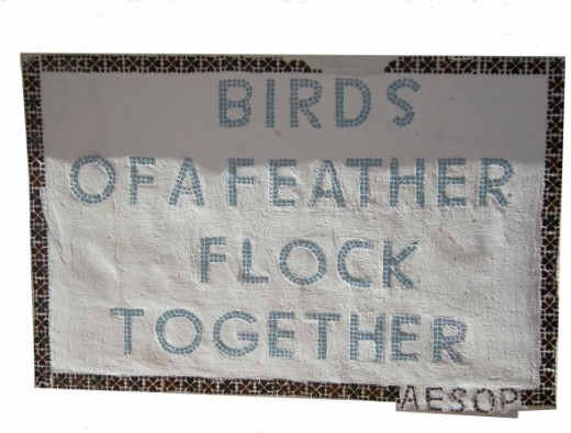 "The Orange Show, ""Birds of a Feather"" motto"