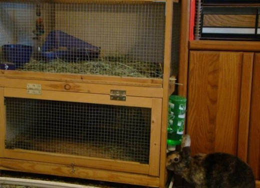 Amerisa looking into her cage.