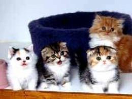 kinky's kittens