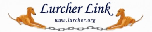 Lurcher Link - helping Lurchers in the UK