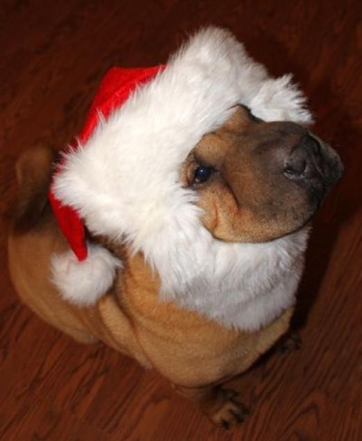 Dogs Love Christmas, Too!
