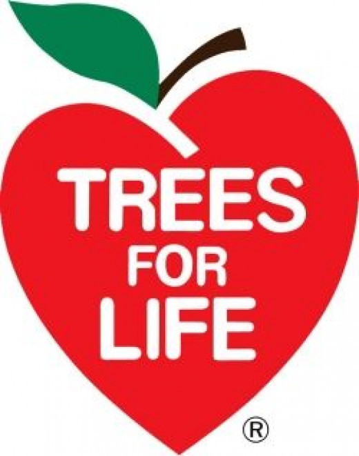 Plant trees in India with Trees for Life