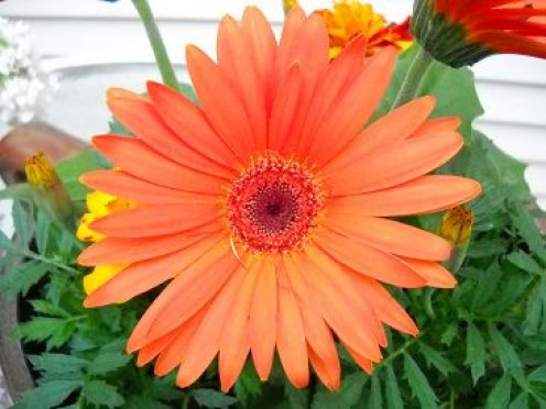 Daisies are my moms favorite flowers, and orange is her favorite color.