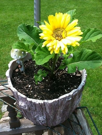 I love this tree stump pot!