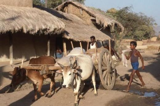This photo was taken in a village near Sambalpur, Orissa, India.