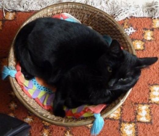 Cat in a Round Basket