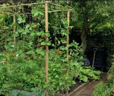Trellis Garden Ideas