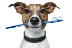 Canine Tartar Removal Issues