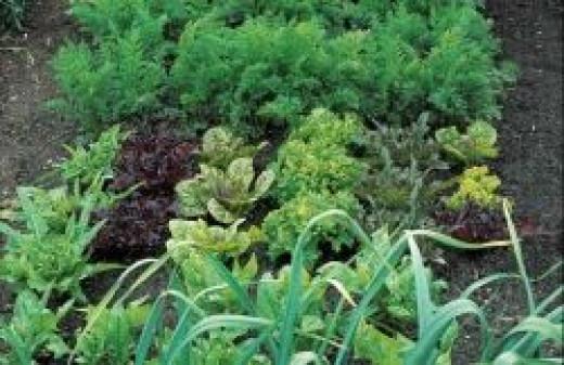 germination stations