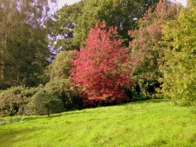 Beautiful Autumn trees:September