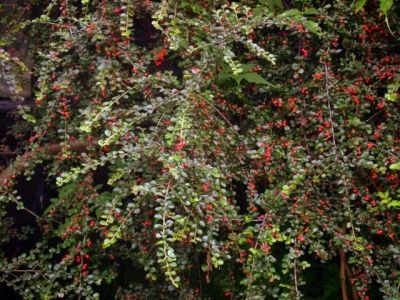 Abundant berries!